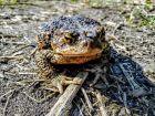 I żaby wylazy