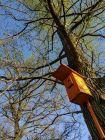 Do domków na drzewach wracają ptaki