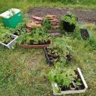 Także w maju sadzimy nasze sadzonki