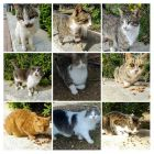 Cypryjskie koty