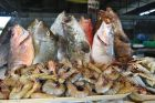 Bacolod - targ rybny