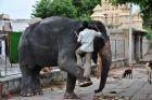 Hampi - mycie świątynnego słonia