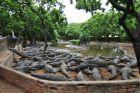Krokodylowy park
