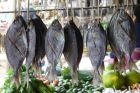 Suszone ryby
