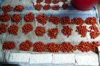 Mini pomidorki - niczym groch