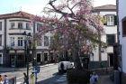 Plac Główny Funchal