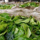 Fabryka herbaty Bois Cheri