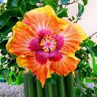 Kwiaty na Mauritiusie
