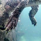 Park Vanilla - łapy krokodyla