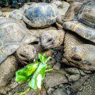 Park Vanilla - żółwie seszelskie