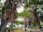 Port Luis - park z ogromnymi drzewami