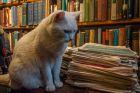 W księgarni jest i kot