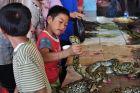 Dzieciak znawca pytonów