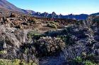 Roślinność wokół Teide